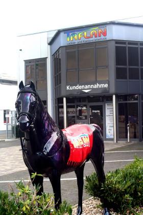 Taflan-Pferd